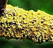 fungus by andyhickling