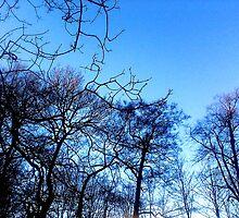 Winter Markings by MissyDee