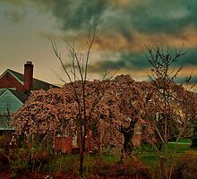 Spring in the Suburb by vadim19