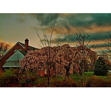 Spring in the Suburb Photographic Print