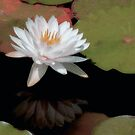 Water Lily by SuddenJim