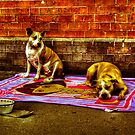 Beggars in Chinatown - HDR by Kutay Photography