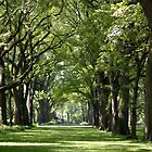 dreamy park lane by Roslyn Lunetta