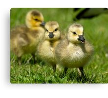 Sibling Revelry Canvas Print