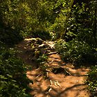 Exposed tree root pathway by moor2sea