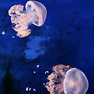 Jellyfishes by Sergey Martyushev