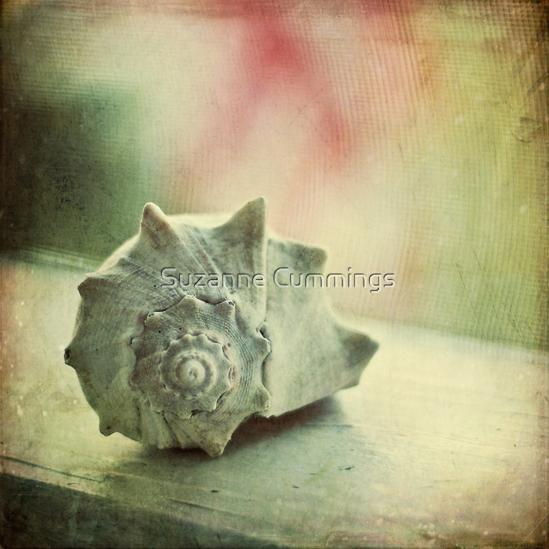 Seashell on Screened Porch by Suzanne Cummings