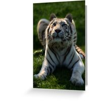 Narnia.. Greeting Card