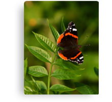 Red Admiral. Canvas Print