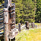 cattle gate and flowers along the road. by the57man