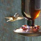 Hum, hum, hummer - such a little bird. by Barb Miller