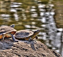 Turtles with Attitude. by Calin Jugarean
