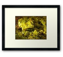 The Hidden Land – The Library Framed Print