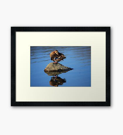 Perched and Grooming Framed Print