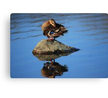 Perched and Grooming Canvas Print