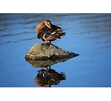 Perched and Grooming Photographic Print