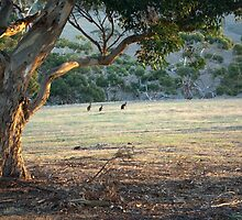 The Field - Kangaroo Island  by imaginethis