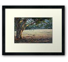 Kangaroos in the Field - Kangaroo Island  Framed Print