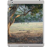 Kangaroos in the Field - Kangaroo Island  iPad Case/Skin