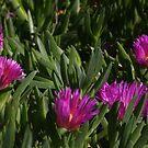 Purple & Green by heatherfriedman