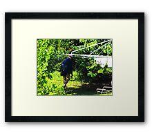 My Beautiful Rain Forest Framed Print
