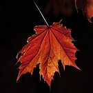 Maple Forever by Marilyn Cornwell