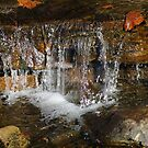 autumn leaves in the creek by janfoster