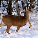 WHITETAIL DOE ON THE MOVE... by Larry Trupp
