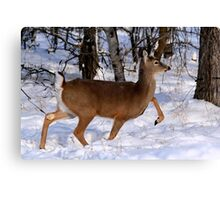 WHITETAIL DOE ON THE MOVE... Canvas Print