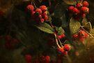 ~ Red Berries ~ by Lynda Heins
