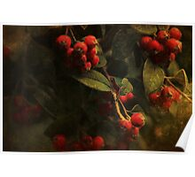 ~ Red Berries ~ Poster