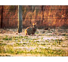 Backyard Stroll Photographic Print