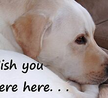 Greeting Card Wish You Were Here dog by Kathleen Brant
