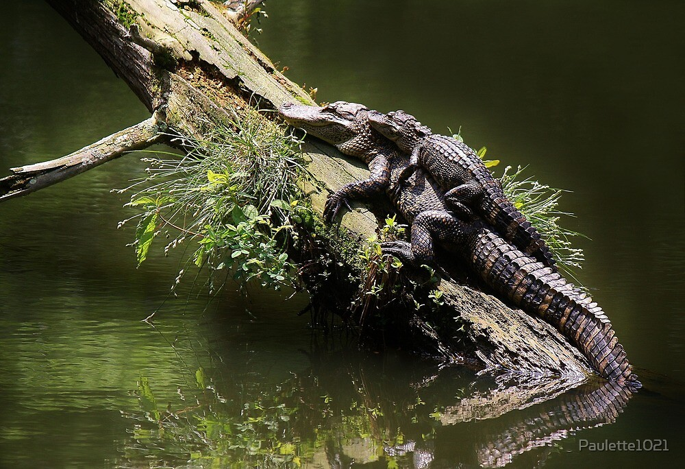 Mama and Baby Alligator by Paulette1021
