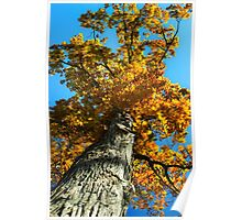 Mighty Oak Tree Poster