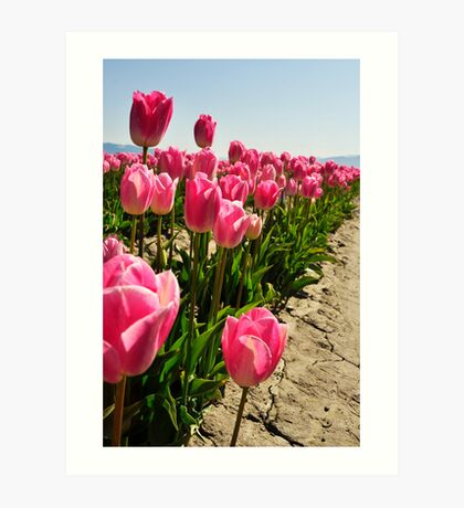Tulips in Skagit Valley Art Print