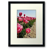 Tulips in Skagit Valley Framed Print