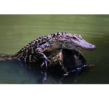 Gator Coming Aboard Photographic Print