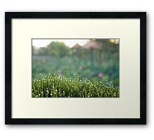 Fresh morning grass Framed Print