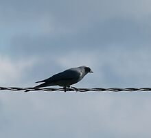 Bird On A Wire by DEB CAMERON