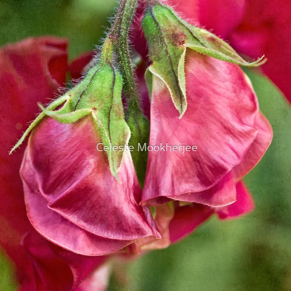 Sweet pea buds by Celeste Mookherjee