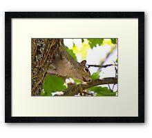 Tree Hopping Framed Print