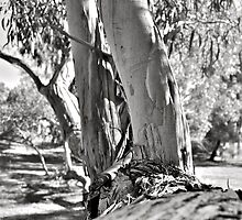 Out on a limb.... by Helen Vercoe