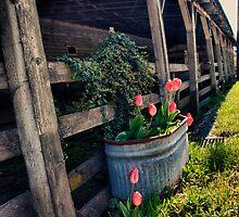 Spring Tulips by Mari  Wirta