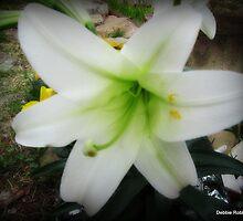 Easter Lily, Oh So Pretty by Debbie Robbins