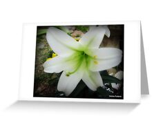 Easter Lily, Oh So Pretty Greeting Card