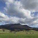 Meander valley beauty - Tasmania by gaylene
