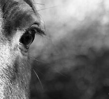 Horsie! by Mike Topley
