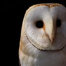 Barn Owl 3 by Mike Topley