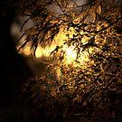Shine by Ruben D. Mascaro